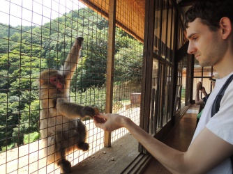 Feeding monkeys