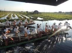 Local boat races in Inle Lake