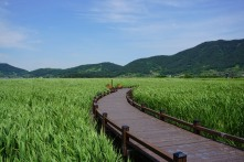 Suncheon bay wetland walk