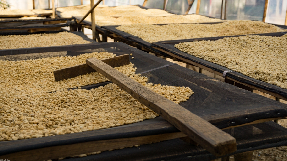 K'Ho Coffee: The Perfect Coffee Farm tour in Dalat, Vietnam